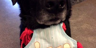 """Amp with her """"Lick the Chef"""" bib"""