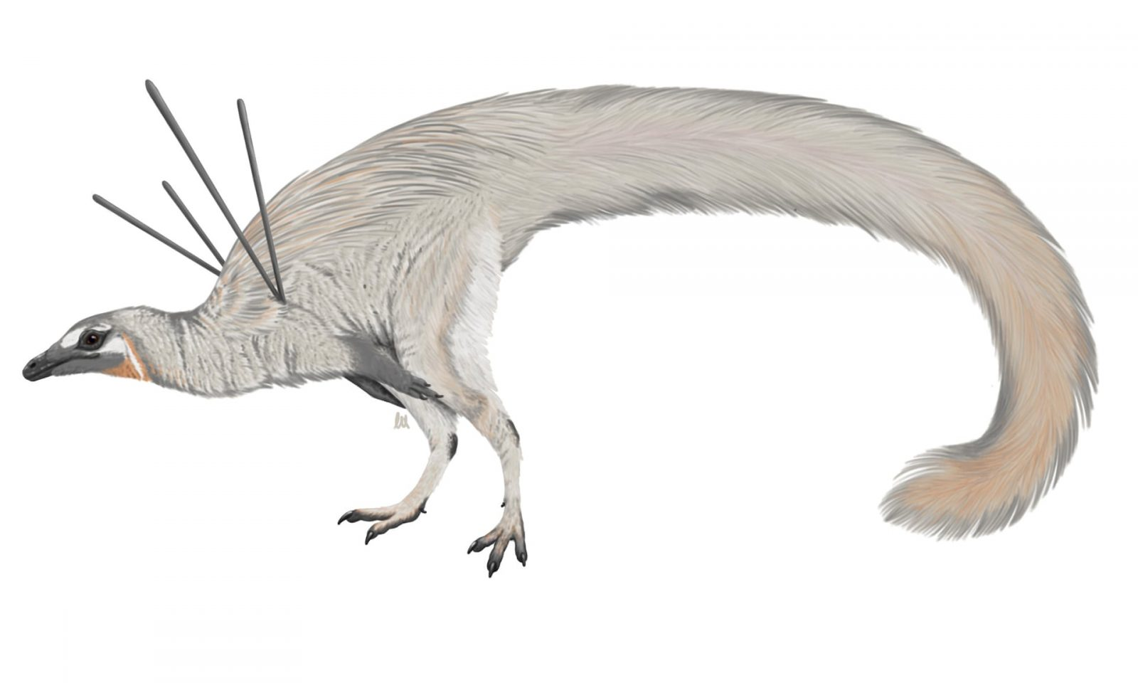 Image: Artist rendering of the newly discovered Ubirajara jubatus - a white bird-like creature with a long tail.