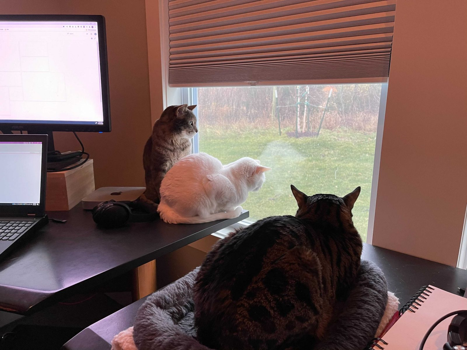 Three cats (one white, two tabby) look out of a window from their various perches.