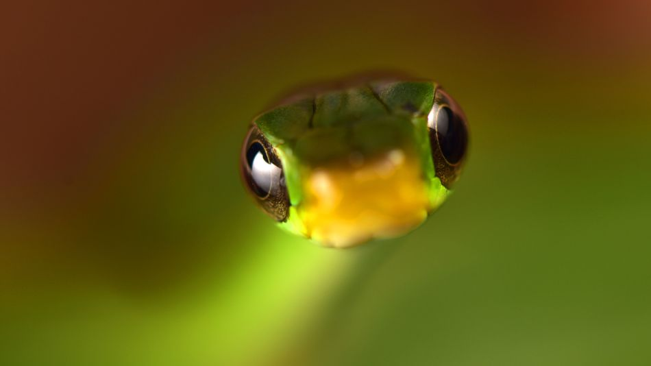 Image: A green snake