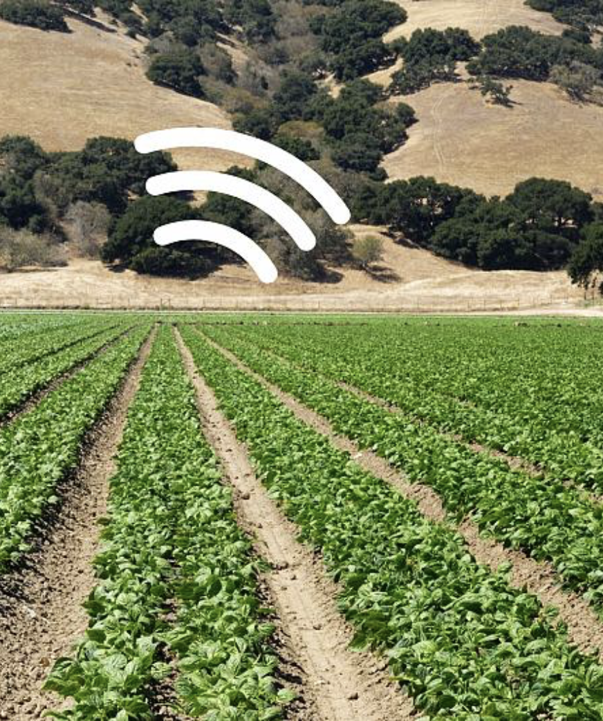 A field of spinach with a superimposed wifi icon.